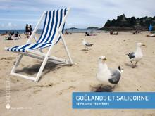Goélands et salicorne